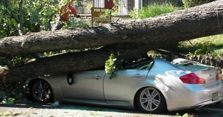 Car crushed by tree in Montreal is perfect insurance ad